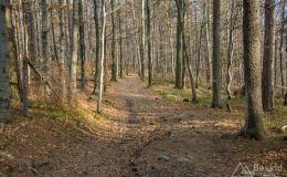 Czerwony szlak z Chrobaczej Łąki do Porąbki