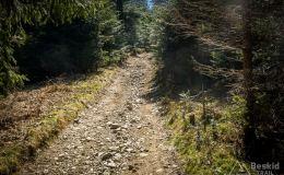 Podjazd z Przełęczy u Poloka na Lachowe Młaki