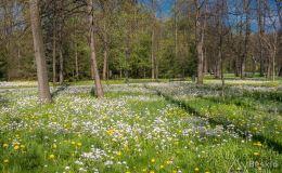 Wiosna w żywieckim parku