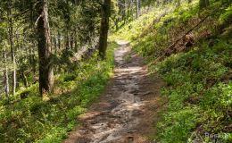 Zjazd niebieskim szlakiem z Przehyby do Rytra