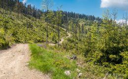 Łącznik pomiędzy Halą Konieczną na żółtym szlakiem do Przysietnicy