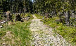 Szlak pomiędzy Jaworzyną Kamienicką a Kiczorą