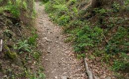 Zjazd z Lubania niebieskim szlakiem do Ochotnicy Dolnej