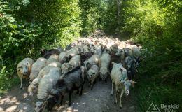 Podjazd z Żabnicy na Słowiankę